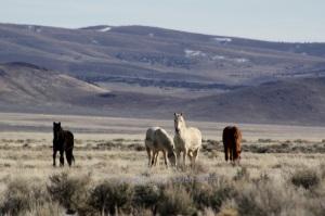 Antelope Complex Wild Horses