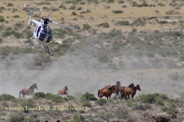"Jackson Mountain roundup done during ""foaling season"" in June tried to exceed BLM authority and take more horses than were justified to take during June"