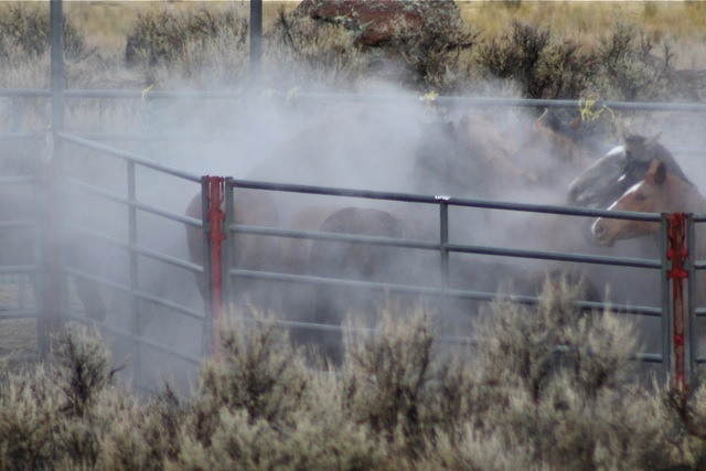 Owyhee trapsite at temperatures in the teens