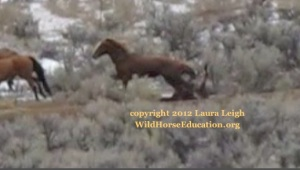 Trampled at Owyhee, still from video