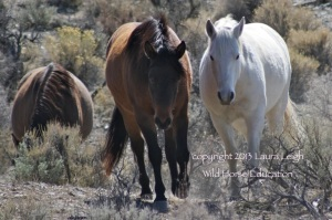 Deer Run wild horses