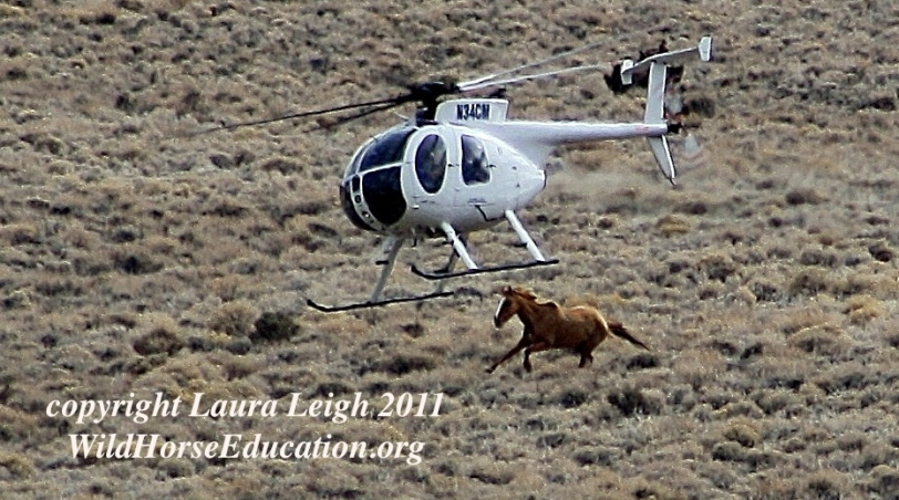 Antelope Complex roundup, the image is from Superbowl Sunday 2/6/2011 (operation took 6 weeks)