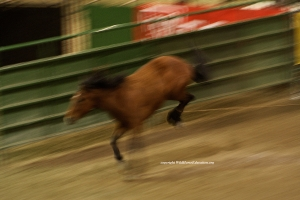 This photo was also taken in Winnemucca NV, added to show speed of horses