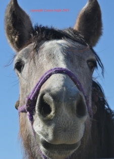 """Katie,"" handled and available at PVC. Big 2 year old girl and loves to be touched!"