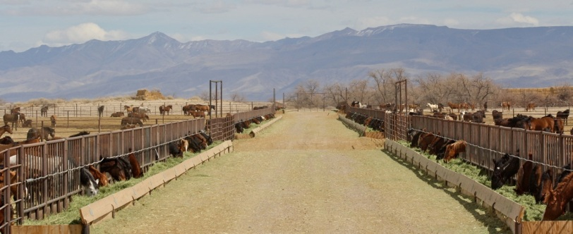 Broken Arrow (Indian Lakes) BLM facility. Sale authority AND adoption eligible animals kept out of public view