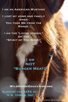 WildHorseEducation.org anti-slaughter poster