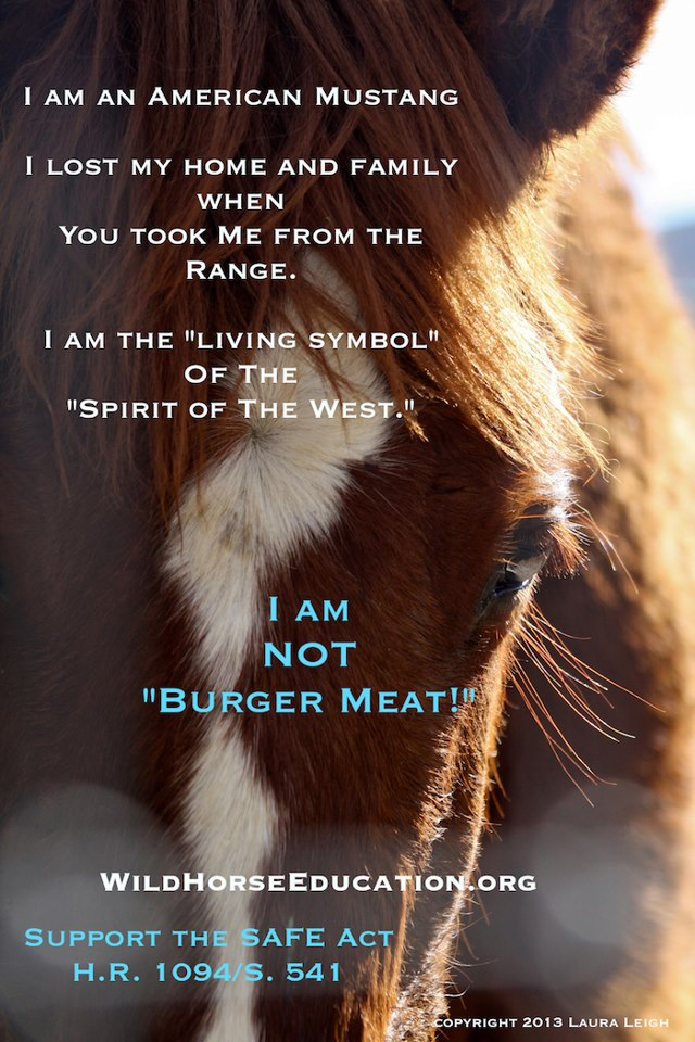 WildHorseEducation.org anti-slaughter poster