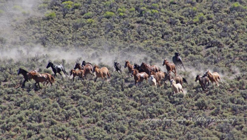 Triple B wild horses removed in 2011 in chaotic removal operation