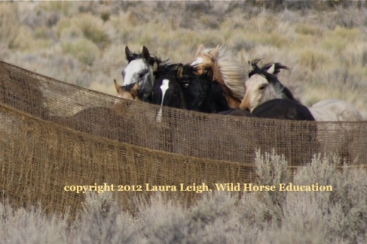 Wild Horses have been removed in unprecedented numbers in the last four years from YOUR public land!