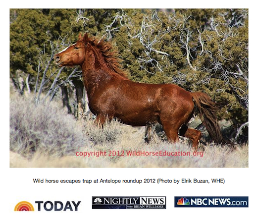 """TODAY show """"Wild, but nor free!"""" aired Tuesday May 14."""