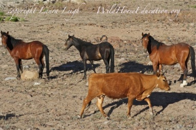 "Will BLM change practices in the wild horse and burro program? Will there be an ""out with the old"" ways?"