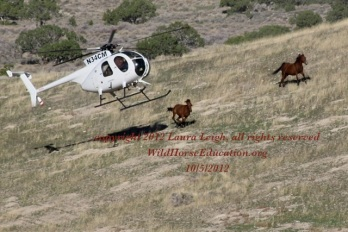 """Antelope, area of proposed """"eco sanctuary,"""" roundup of 2012"""