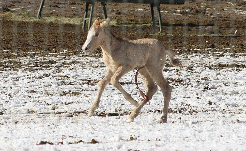 Newborn just days after mom was pulled off the range from Antelope being sorted from general population at pvc
