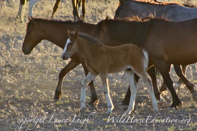 Family... it is everything to horses on the range