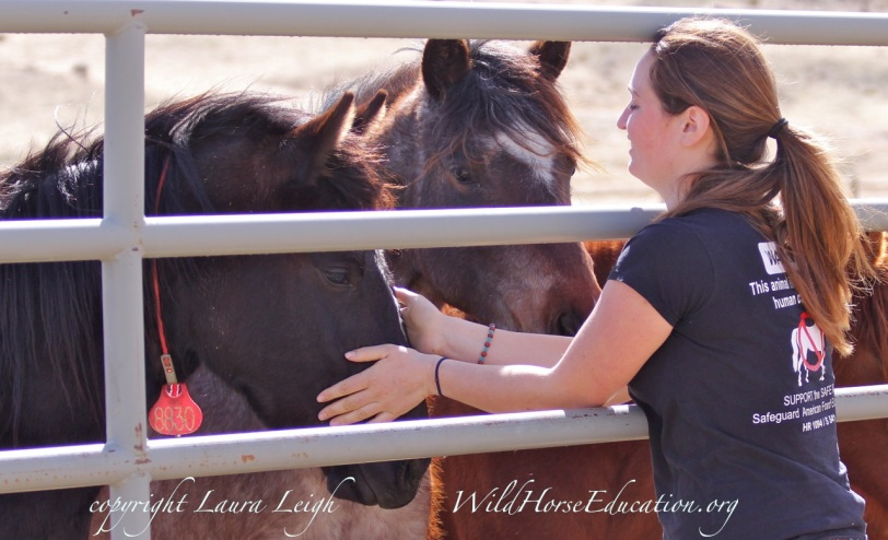 Filly available for adoption onsite at Palomino Valley Center