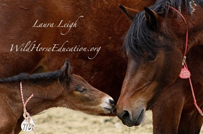 """Mom and baby share a tender moment in short-term holding. Baby will be """"weaned"""" at 3-4 months old and mom went to """"long term"""" holding in """"sale authority."""""""