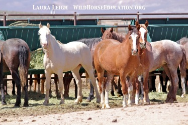 Horses awaiting homes listed on the Internet at PVC