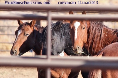 Sheldon Mustangs that went to Stan Palmer and J & S that have sent horses to kill buyers in the past