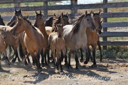 Riddle mares and foals
