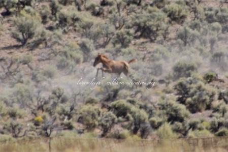 New foal run in extreme heat, Triple B 2011